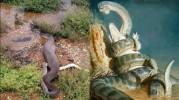 Ternyata Ini Ular Terbesar di Sepanjang Sejarah Bukan Anaconda Melainkan Titanoba