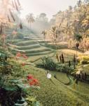 Rekomendasi Wisata di Bali yang Menyuguhkan Pemandangan Hijau