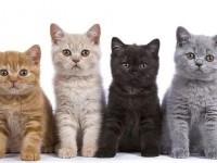 Ternyata Warna Bulu Pada Kucing memiliki Filosofi yang Bermanfaat